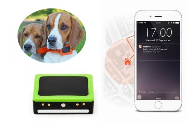 articles pour chien de chasse sur armurerie lavaux. Black Bedroom Furniture Sets. Home Design Ideas