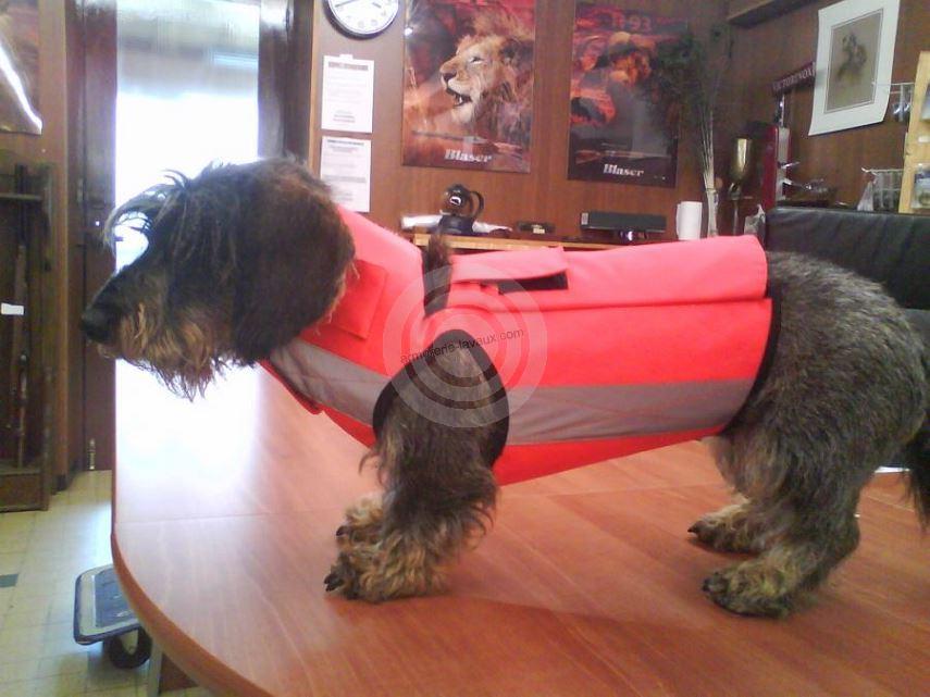 gilet de protection pour chien ayrton 39 taille 0 5 rayon. Black Bedroom Furniture Sets. Home Design Ideas